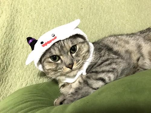 おばけのかぶりもの、猫1匹