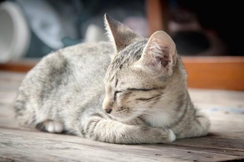 片手を隠して眠っている猫