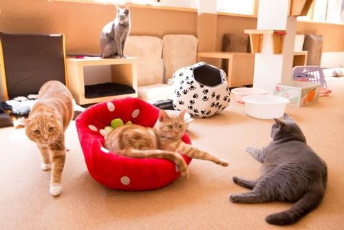 ベッドの猫とその周りにいる猫達