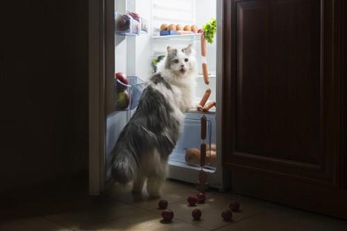 冷蔵庫をのぞいている猫