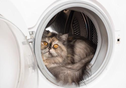洗濯機の中で寛ぐ猫