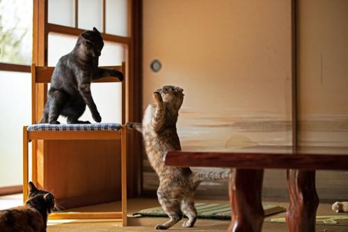椅子の上と下でケンカする2匹の猫