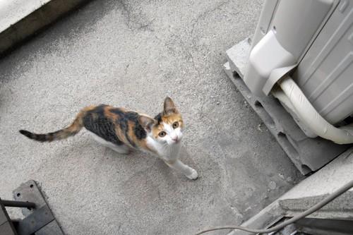 室外機近くの猫