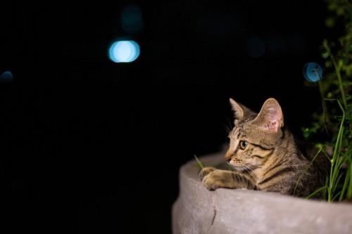 お墓に居続ける猫イメージ