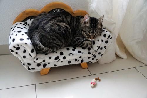 おもちゃで遊ばず寝ている猫