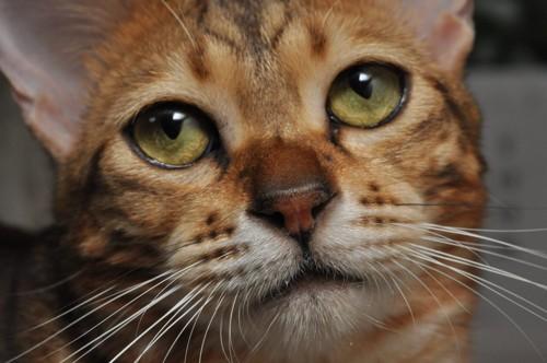 猫の顔ドアップ