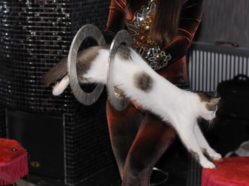 輪の中をジャンプする猫