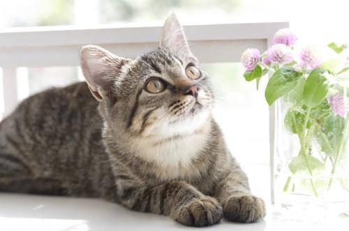 花を見つめる猫