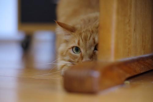 家具の隙間からじっと見つめる猫