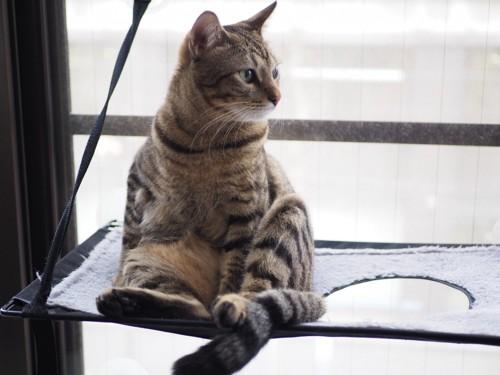 おっさん座りの猫