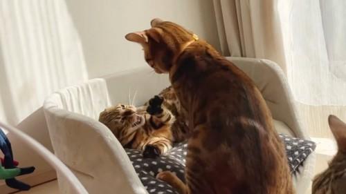 寝転がる猫と黄色い首輪の猫