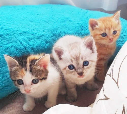 兄弟猫と喜一