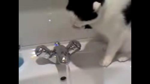 うがい?する猫