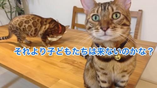 ケーキを食べる猫とお座りする猫