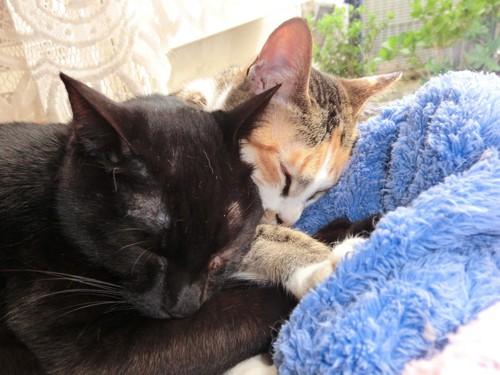 仲良く一緒に寝ている姿