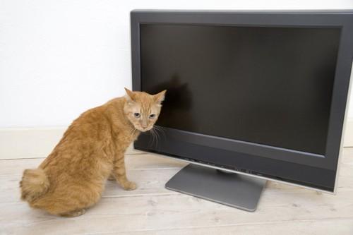 テレビの前に居る猫