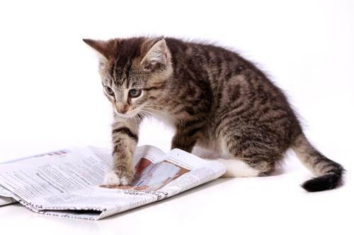 新聞と子猫