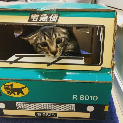 箱にいる猫