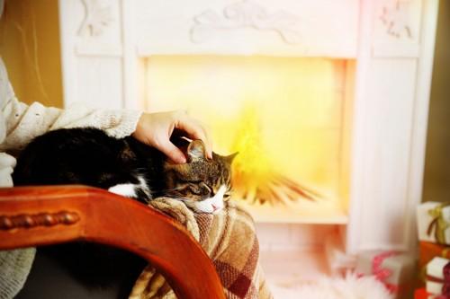 膝の上で寝ている猫