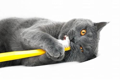 黄色い歯ブラシを両手で持って歯をみがいている猫