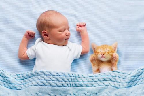 赤ちゃんと眠る猫