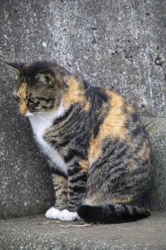 地面にエジプト座りする野良猫