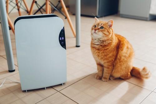 空気清浄機と可愛い猫