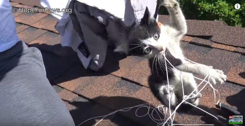 屋根の上に下ろされた子猫