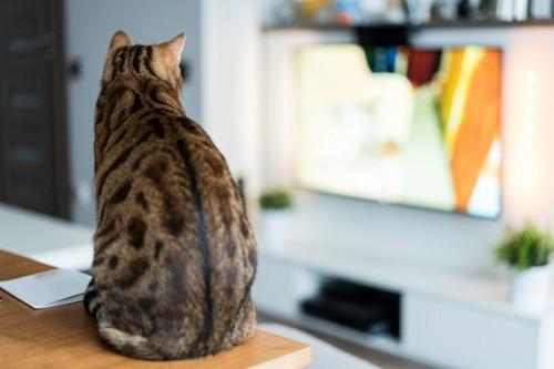 背中見せる猫