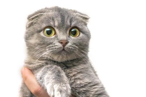びっくりした表情の猫