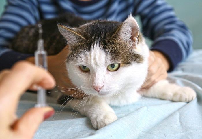 ワクチン接種される前の猫