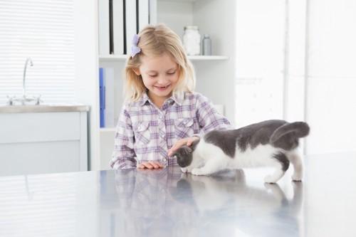 女の子に近づく子猫