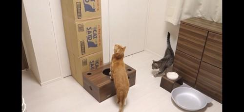 段差に前足を乗せる猫