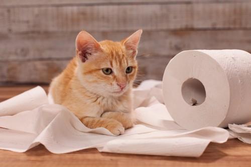 トイレットペーパーをイタズラする猫