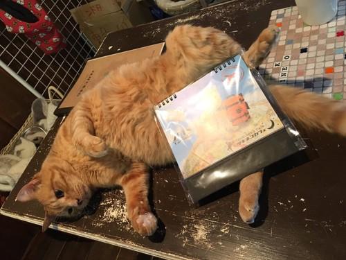 ツキネコカフェの猫