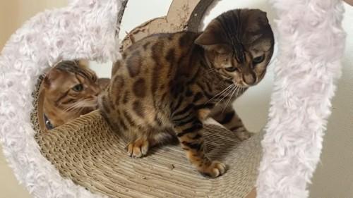 爪とぎの中にいる猫と外にいる猫