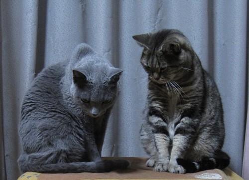 二匹の猫が下を向いている