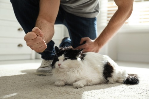 角砂糖で遊ぶ猫