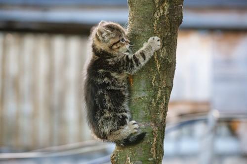 木にしがみ付いている子猫