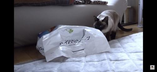 袋のにおいを嗅ぐ猫