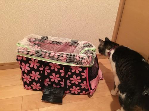 洗濯ネットをかけたキャリーバッグと猫