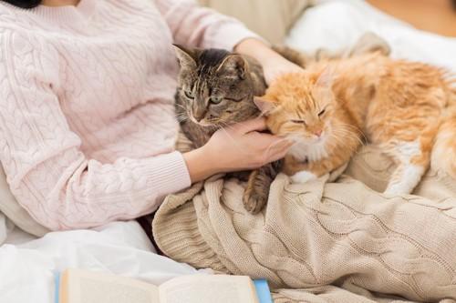 飼い主のお腹の上でくつろぐ二匹の猫