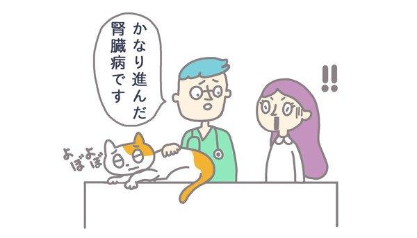 腎臓病と診断される猫