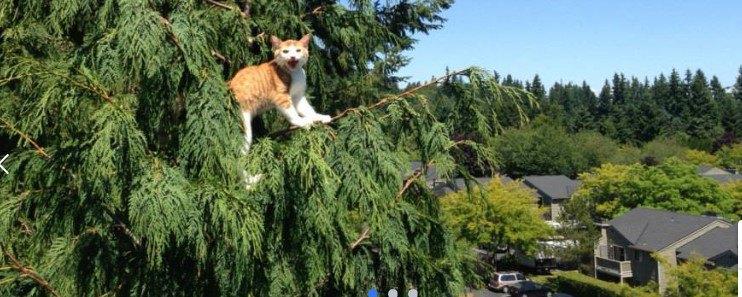 高い木の上の猫