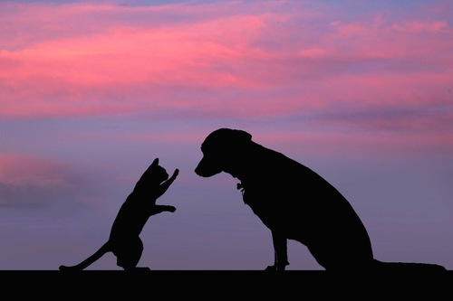 立ち上がって犬に指示を出す猫のシルエット