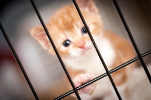 ケージの中で悲しそうな顔の猫