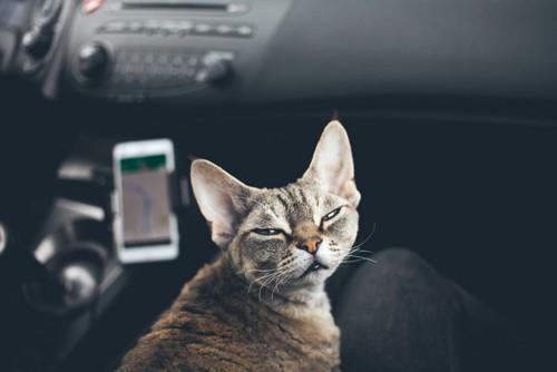 車の中で目を細くする猫