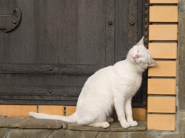壁にすり寄る猫