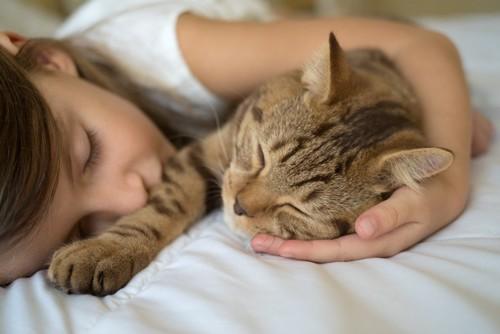 少女と眠る猫