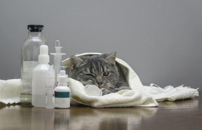 布にくるまる猫と薬